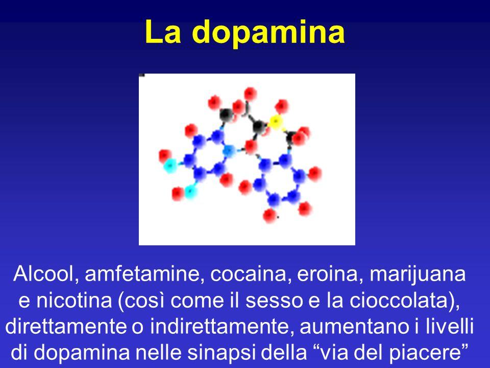La dopamina Alcool, amfetamine, cocaina, eroina, marijuana e nicotina (così come il sesso e la cioccolata), direttamente o indirettamente, aumentano i livelli di dopamina nelle sinapsi della via del piacere