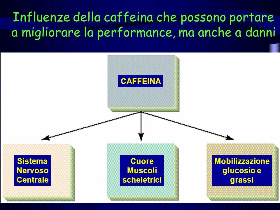 Influenze della caffeina che possono portare a migliorare la performance, ma anche a danni CAFFEINA Sistema Nervoso Centrale Cuore Muscoli scheletrici Mobilizzazione glucosio e grassi