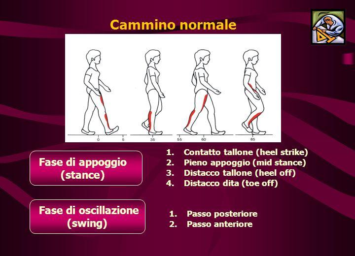 Cammino normale Fase di appoggio (stance) 1.1.Contatto tallone (heel strike) 2.