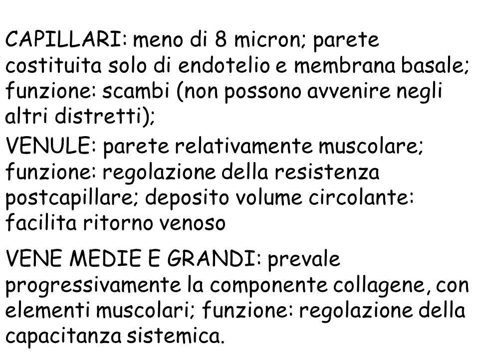CAPILLARI: meno di 8 micron; parete costituita solo di endotelio e membrana basale; funzione: scambi (non possono avvenire negli altri distretti); VEN