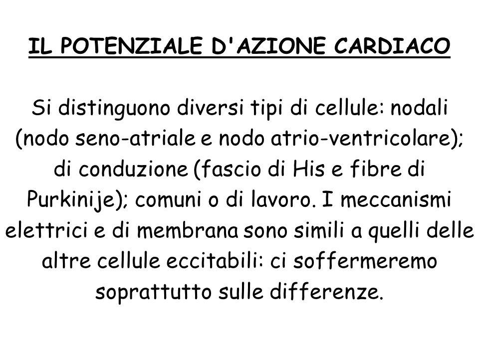 IL POTENZIALE D'AZIONE CARDIACO Si distinguono diversi tipi di cellule: nodali (nodo seno-atriale e nodo atrio-ventricolare); di conduzione (fascio di
