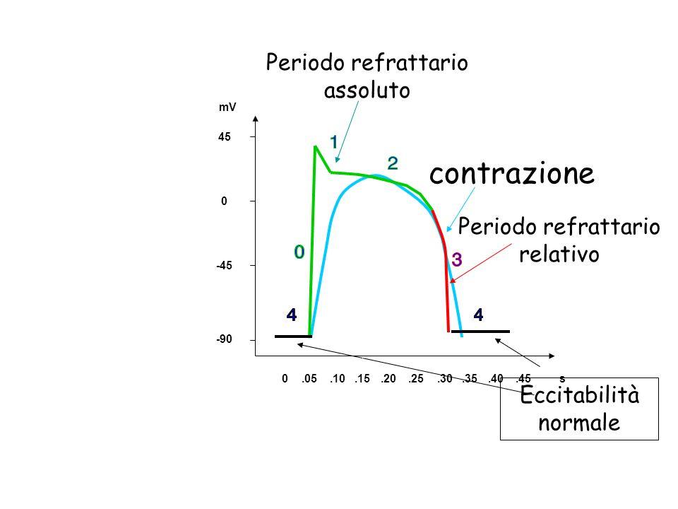 contrazione Periodo refrattario assoluto Periodo refrattario relativo Eccitabilità normale 0.05.10.15.20.25.30.35.40.45s -90 -45 0 45 mV