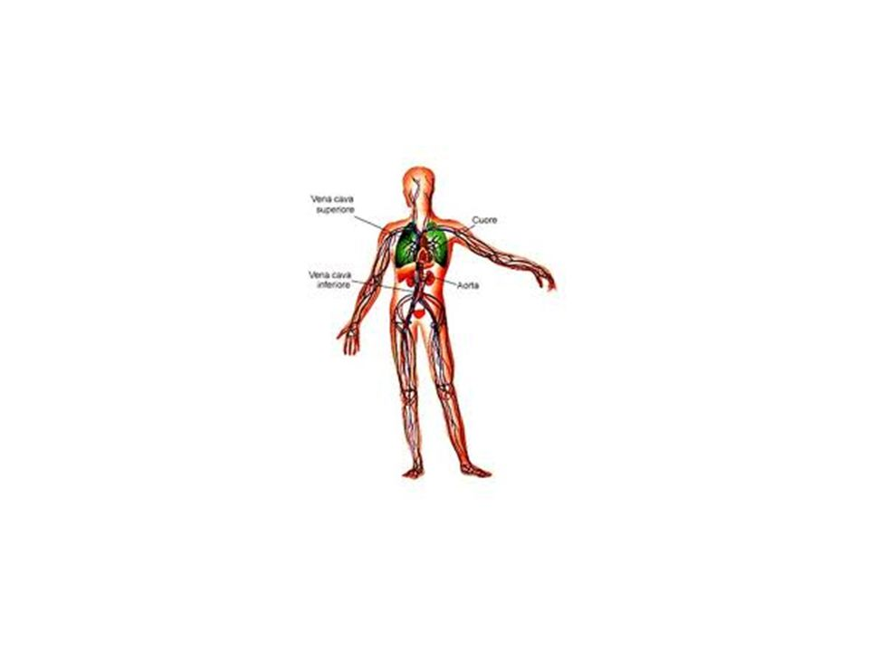A cuore fermo, il circuito contiene una PRESSIONE CIRCOLATORIA MEDIA (anche detta sistemica media o pressione di riempimento) di 7 mmHg.