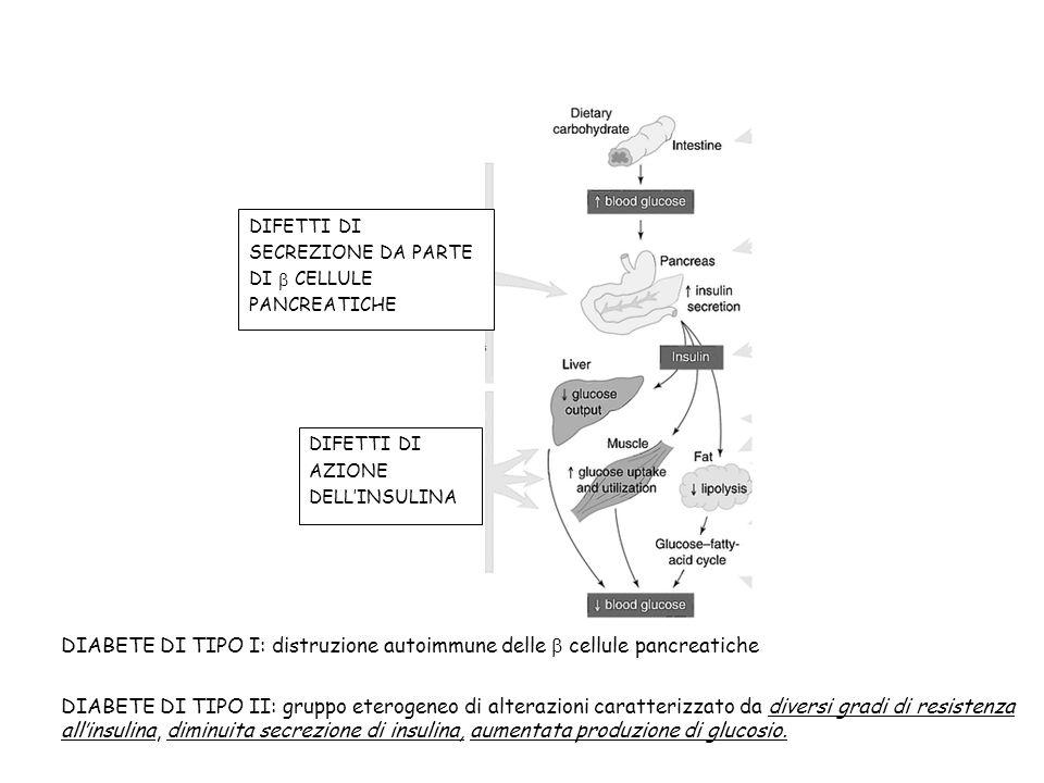 DIFETTI DI SECREZIONE DA PARTE DI CELLULE PANCREATICHE DIFETTI DI AZIONE DELLINSULINA DIABETE DI TIPO I: distruzione autoimmune delle cellule pancreat