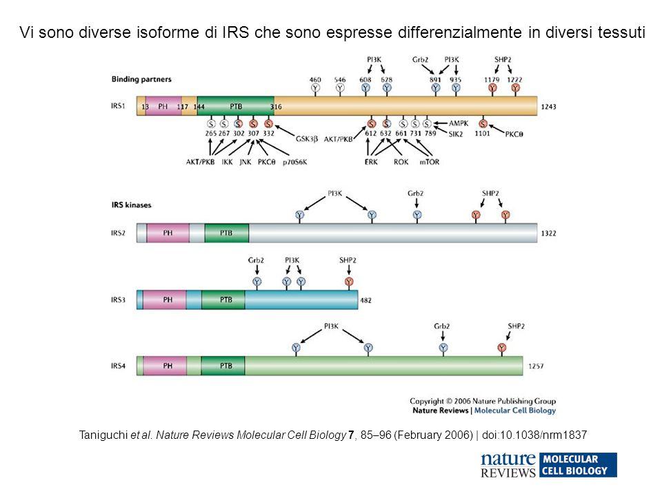 Taniguchi et al. Nature Reviews Molecular Cell Biology 7, 85–96 (February 2006) | doi:10.1038/nrm1837 Vi sono diverse isoforme di IRS che sono espress