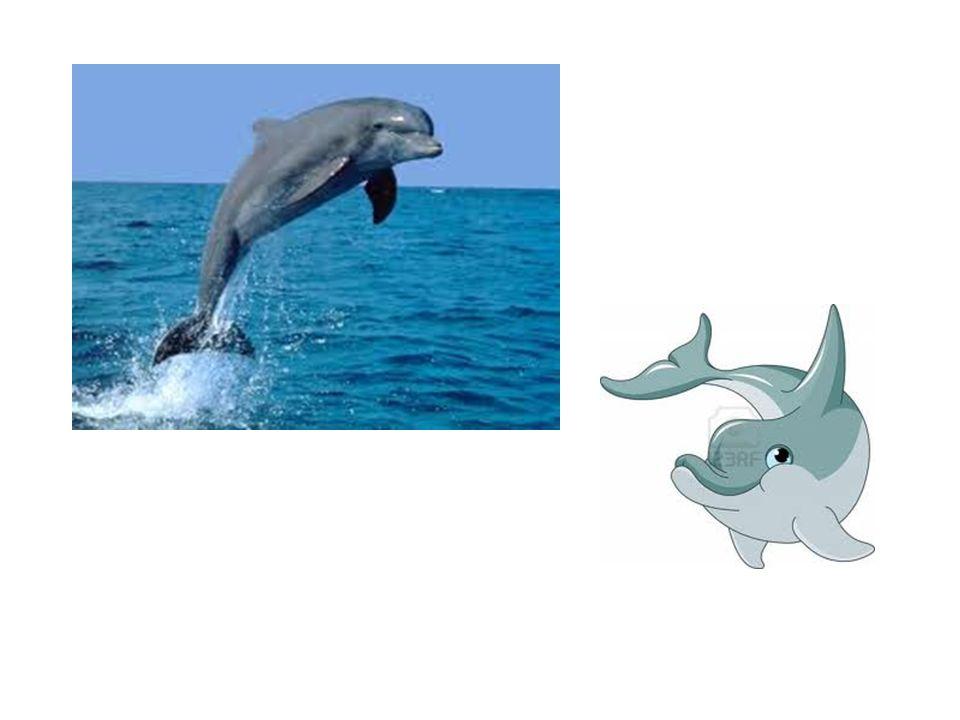 A differenza dagli altri stili l apprendimento del delfino inizia dall insegnamento della bracciata.