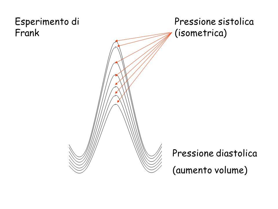 Pressione sistolica (isometrica) Pressione diastolica (aumento volume) Esperimento di Frank