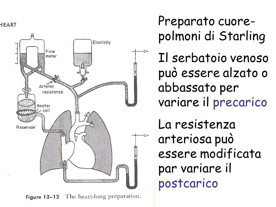 Preparato cuore- polmoni di Starling Il serbatoio venoso può essere alzato o abbassato per variare il precarico La resistenza arteriosa può essere mod