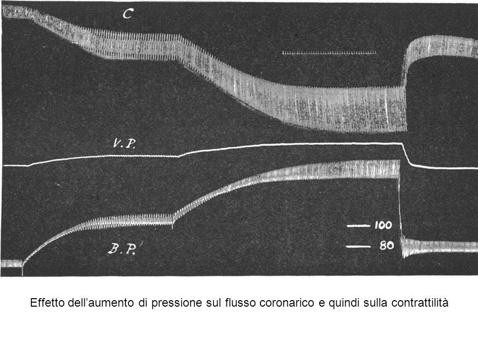 Effetto dellaumento di pressione sul flusso coronarico e quindi sulla contrattilità
