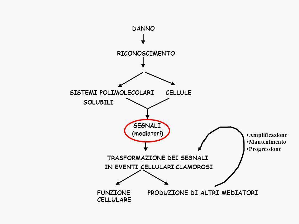 MEDIATORI Tutte quelle molecole che determinano linsorgere e partecipano allo sviluppo dei fenomeni che si osservano durante levento infiammatorio.