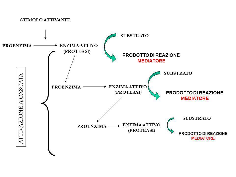 PROENZIMA SUBSTRATO STIMOLO ATTIVANTE ENZIMA ATTIVO (PROTEASI) ENZIMA ATTIVO (PROTEASI) PROENZIMA PRODOTTO DI REAZIONE MEDIATORE ATTIVAZIONE A CASCATA