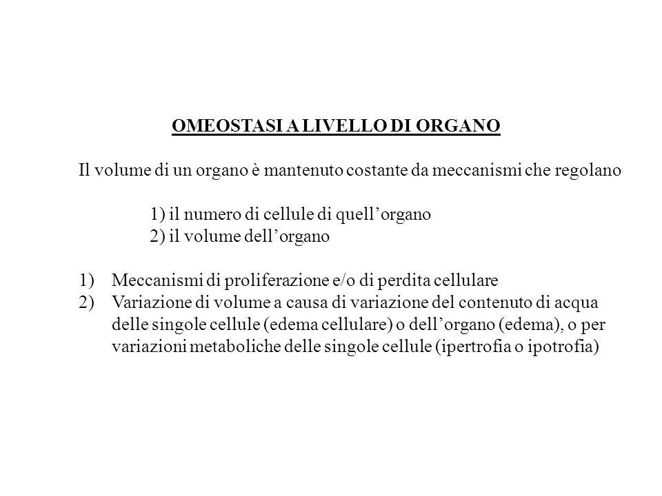 OMEOSTASI A LIVELLO DI ORGANO Il volume di un organo è mantenuto costante da meccanismi che regolano 1) il numero di cellule di quellorgano 2) il volu