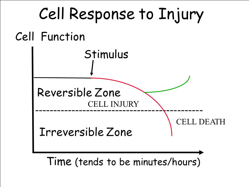 Cell Response to Injury ---------------------------------------------- Stimulus Reversible Zone Irreversible Zone Time (tends to be minutes/hours) Cel