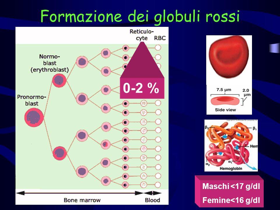 Formazione dei globuli rossi Maschi<17 g/dl Femine<16 g/dl 0-2 %
