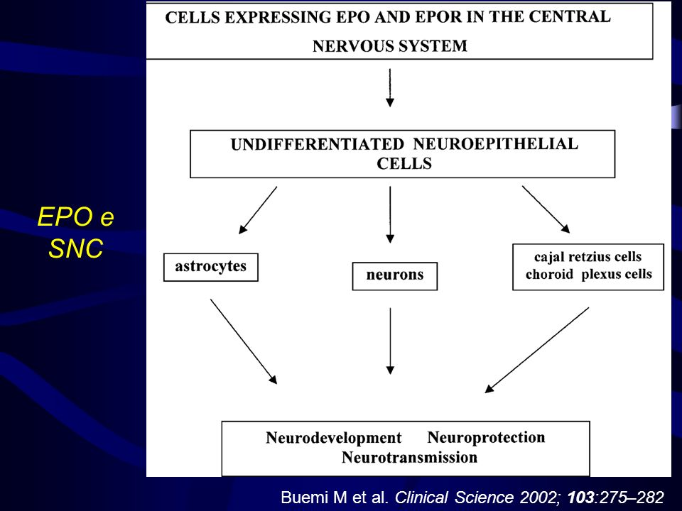 Buemi M et al. Clinical Science 2002; 103:275–282 EPO e SNC