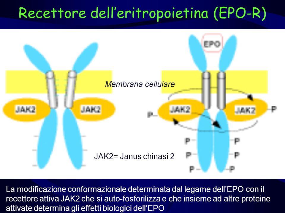 Recettore delleritropoietina (EPO-R) Membrana cellulare JAK2= Janus chinasi 2 La modificazione conformazionale determinata dal legame dellEPO con il r