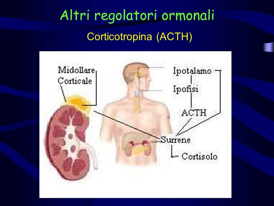 Corticotropina (ACTH) E un ormone prodotto dallipofisi anteriore.