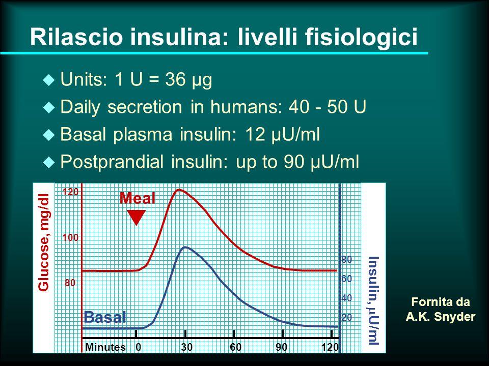 Recettore dellinsulina Recettori superfice cellulare: sub-unità siti di legame dellinsulina sub-unita con attività tirosin kinasi Membrana plasmatica Fornita da Ann K.
