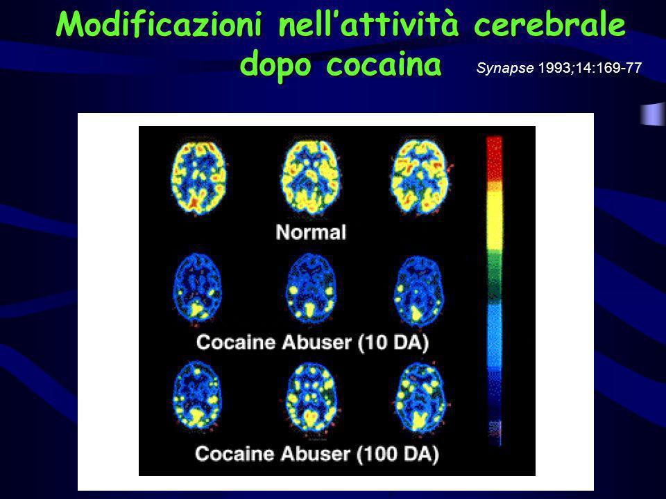 Modificazioni nellattività cerebrale dopo cocaina Synapse 1993;14:169-77