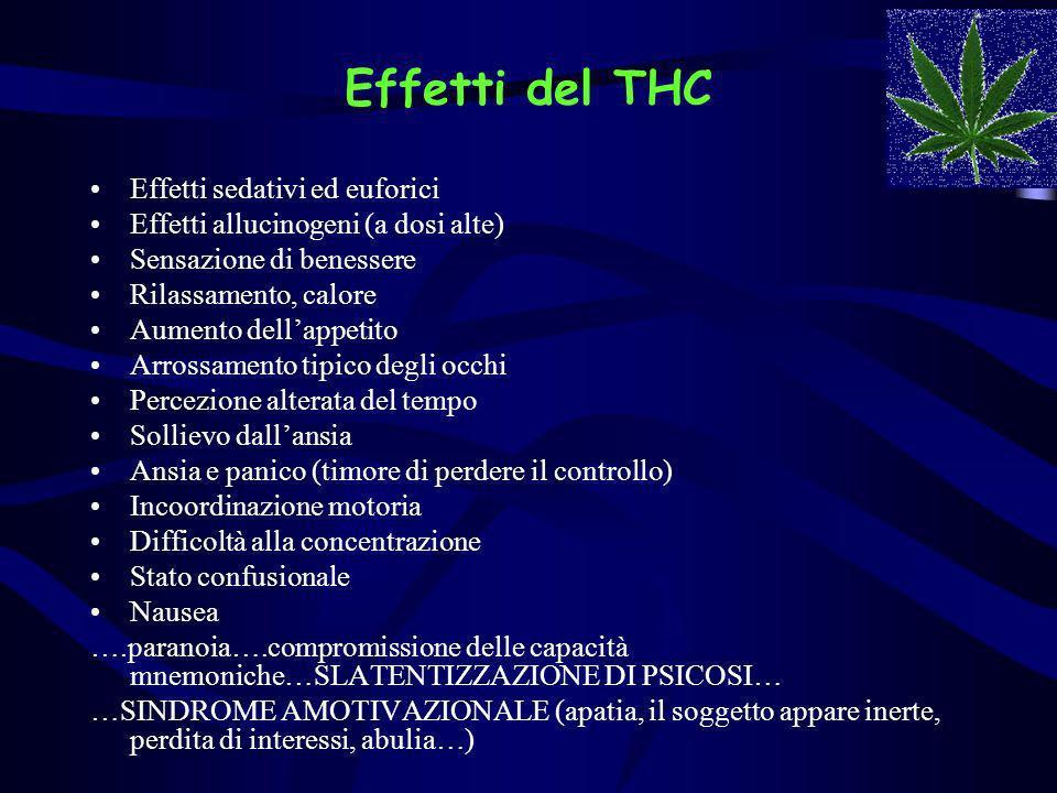 Effetti del THC Effetti sedativi ed euforici Effetti allucinogeni (a dosi alte) Sensazione di benessere Rilassamento, calore Aumento dellappetito Arro