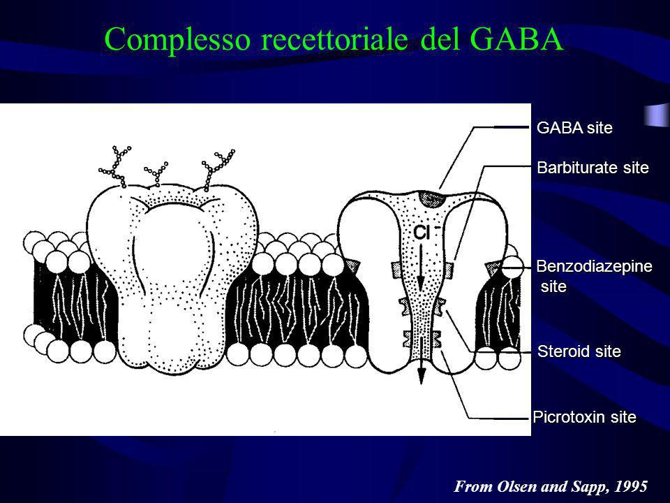 From Olsen and Sapp, 1995 Complesso recettoriale del GABA GABA site Barbiturate site Benzodiazepine site site Steroid site Picrotoxin site