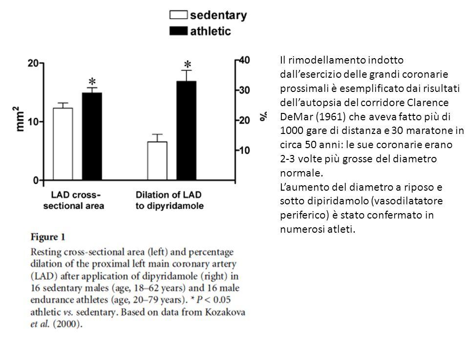 Il rimodellamento indotto dallesercizio delle grandi coronarie prossimali è esemplificato dai risultati dellautopsia del corridore Clarence DeMar (196