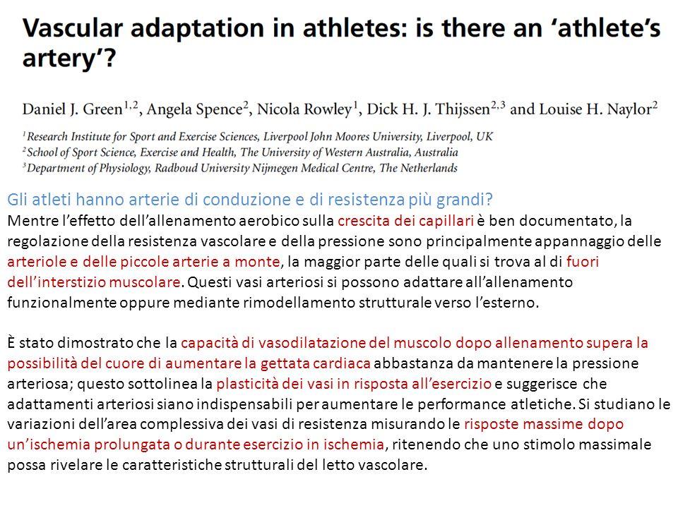 Gli atleti hanno arterie di conduzione e di resistenza più grandi? Mentre leffetto dellallenamento aerobico sulla crescita dei capillari è ben documen