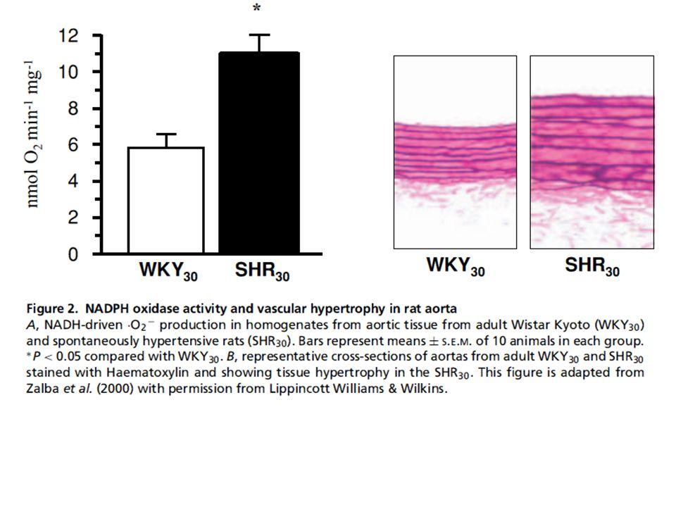 Alterazioni croniche del flusso sanguigno provocano cambiamenti nella stessa direzione del diametro del lume.
