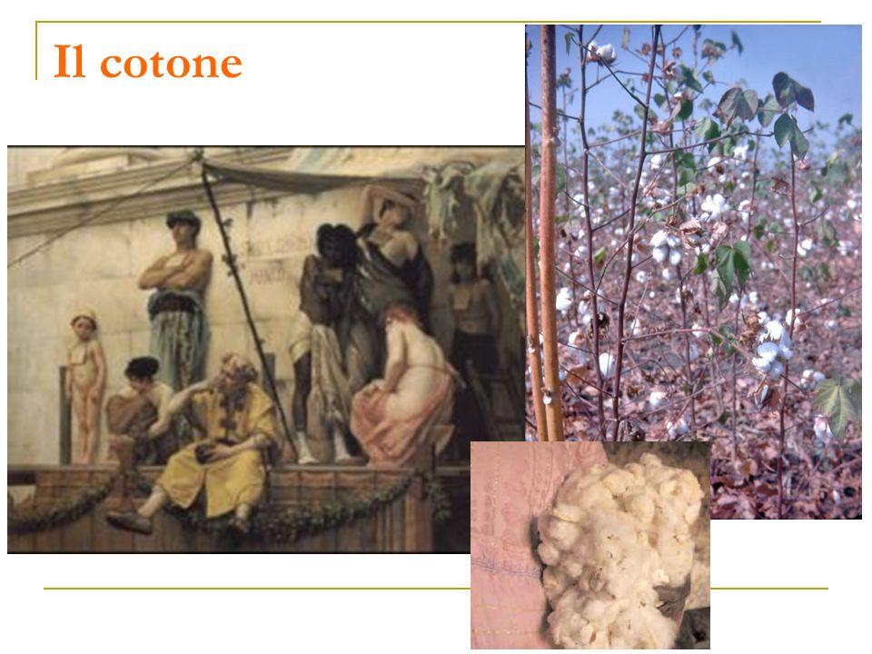 Il cotone