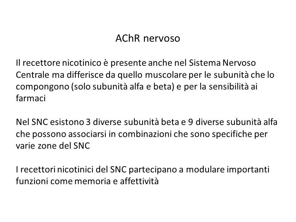 AChR nervoso Il recettore nicotinico è presente anche nel Sistema Nervoso Centrale ma differisce da quello muscolare per le subunità che lo compongono