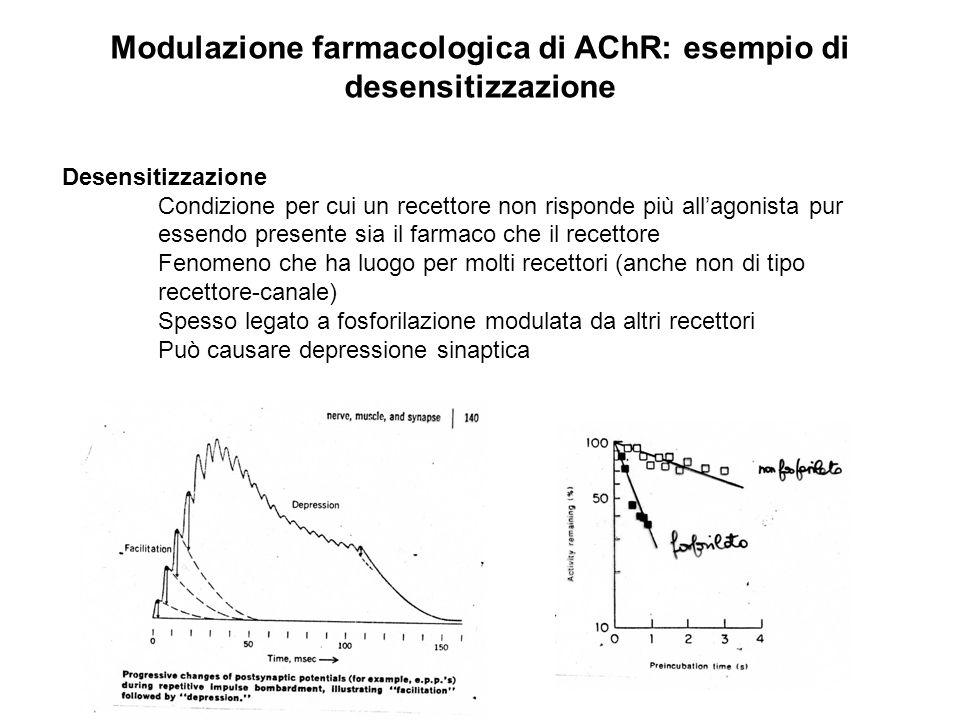 Modulazione farmacologica di AChR: esempio di desensitizzazione Desensitizzazione Condizione per cui un recettore non risponde più allagonista pur ess