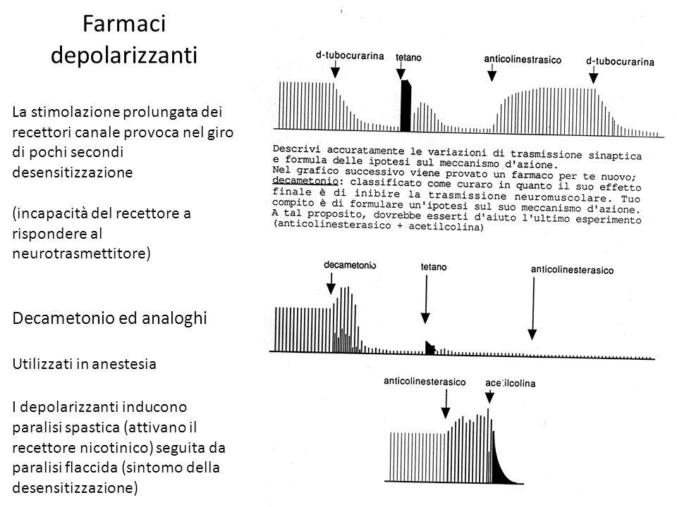 Farmaci depolarizzanti La stimolazione prolungata dei recettori canale provoca nel giro di pochi secondi desensitizzazione (incapacità del recettore a