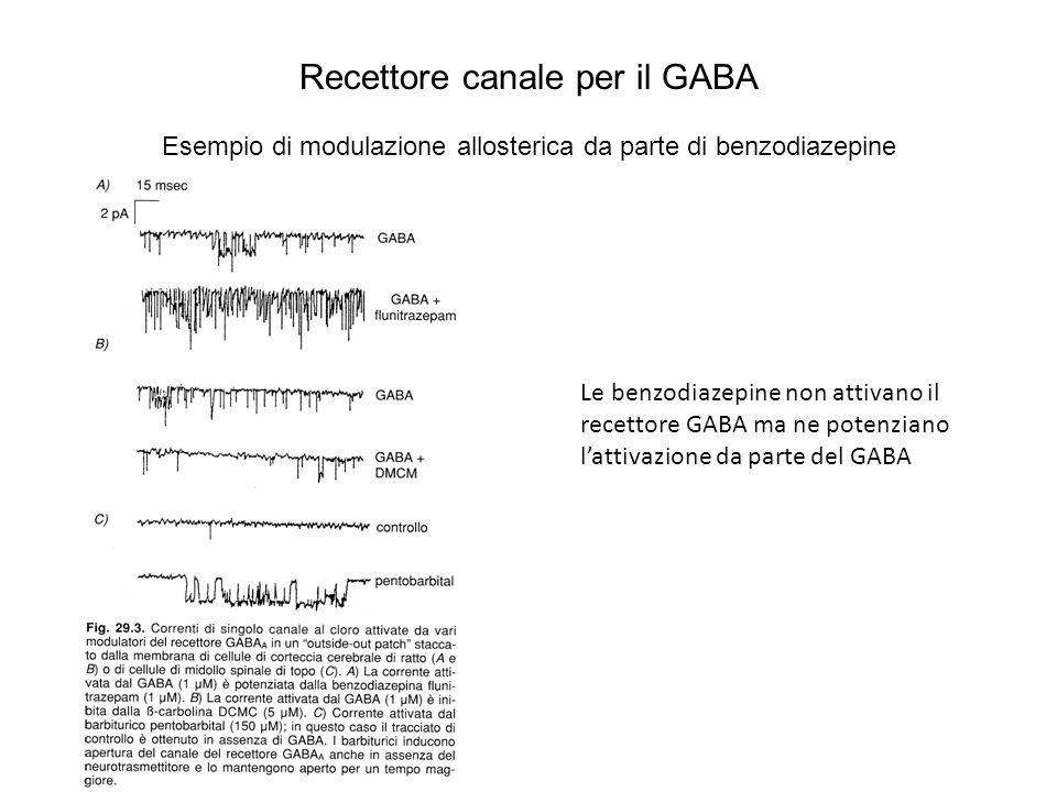 Recettore canale per il GABA Esempio di modulazione allosterica da parte di benzodiazepine Le benzodiazepine non attivano il recettore GABA ma ne pote