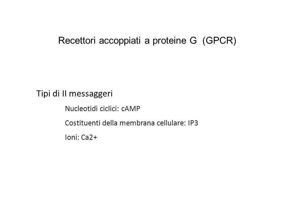Tipi di II messaggeri Nucleotidi ciclici: cAMP Costituenti della membrana cellulare: IP3 Ioni: Ca2+ Recettori accoppiati a proteine G (GPCR)