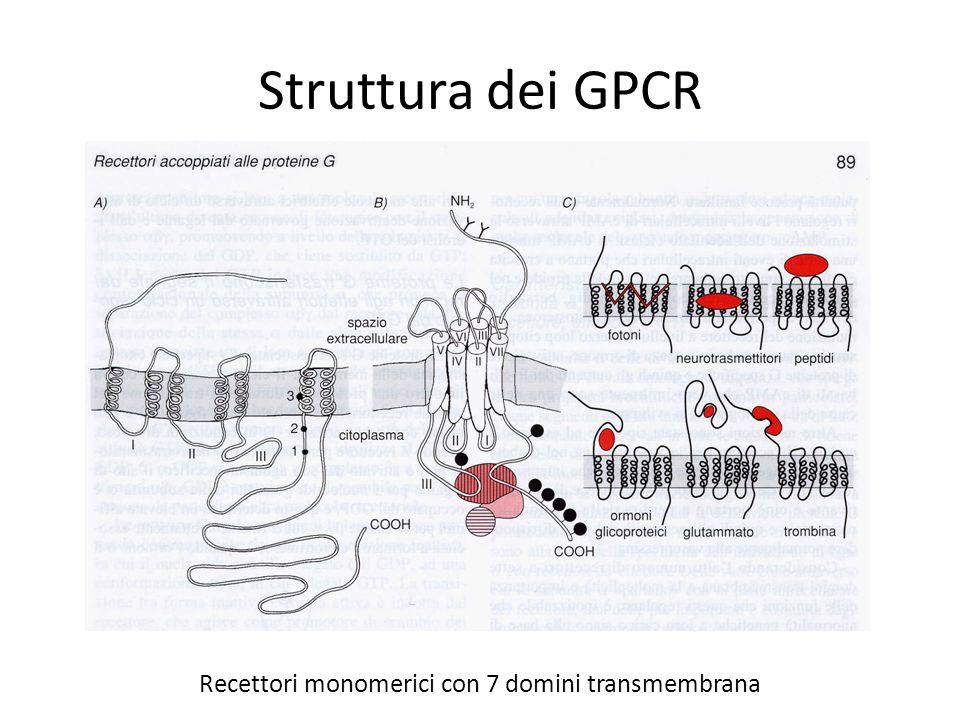 Struttura dei GPCR Recettori monomerici con 7 domini transmembrana