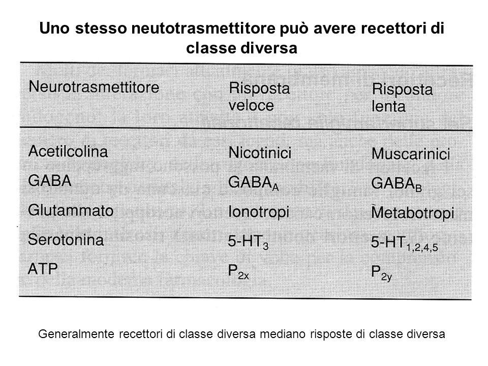 Uno stesso neutotrasmettitore può avere recettori di classe diversa Generalmente recettori di classe diversa mediano risposte di classe diversa