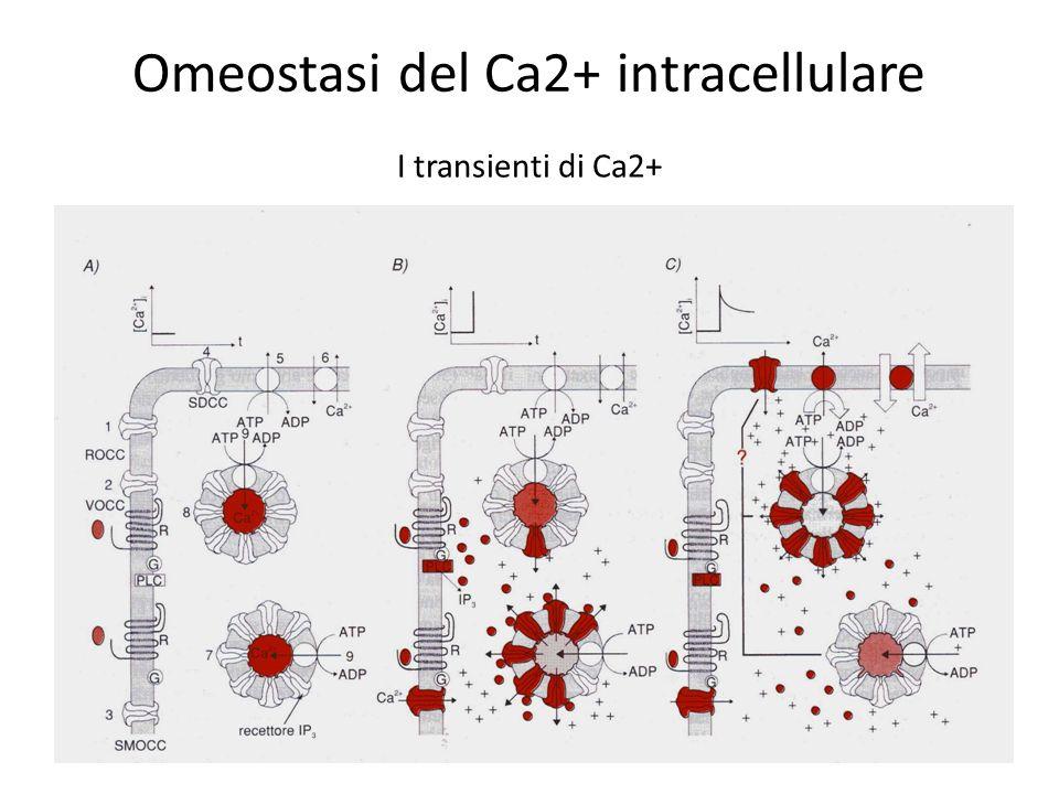 Omeostasi del Ca2+ intracellulare I transienti di Ca2+