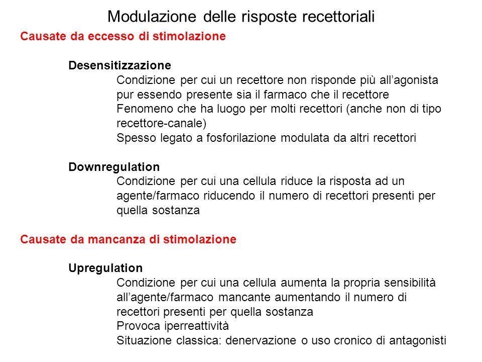 Modulazione delle risposte recettoriali Causate da eccesso di stimolazione Desensitizzazione Condizione per cui un recettore non risponde più allagoni