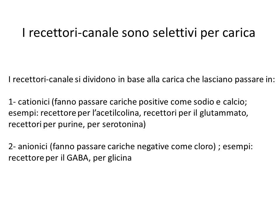 I recettori-canale sono selettivi per carica I recettori-canale si dividono in base alla carica che lasciano passare in: 1- cationici (fanno passare c