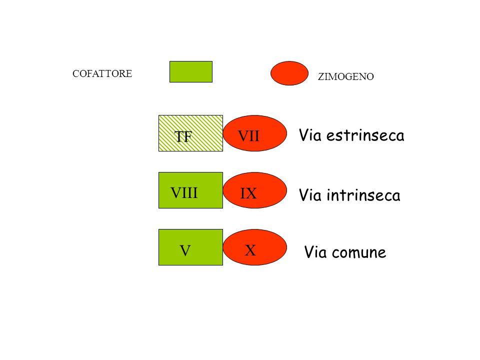 COFATTORE ZIMOGENO TF VII Via estrinseca IX VIII Via intrinseca X V Via comune