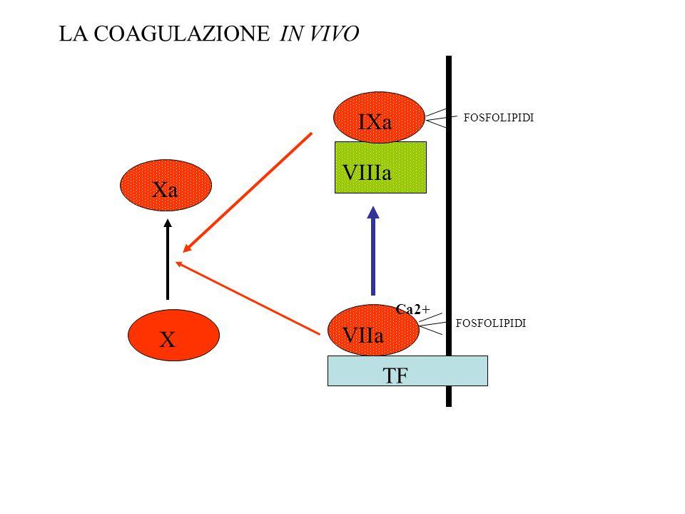 VIIa Ca2+ FOSFOLIPIDI TF Xa X IXa VIIIa FOSFOLIPIDI LA COAGULAZIONE IN VIVO