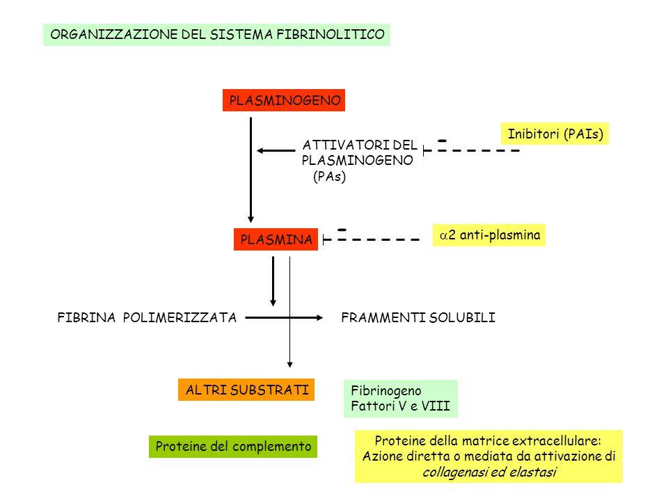 ORGANIZZAZIONE DEL SISTEMA FIBRINOLITICO PLASMINA FIBRINA POLIMERIZZATAFRAMMENTI SOLUBILI 2 anti-plasmina PLASMINOGENO ATTIVATORI DEL PLASMINOGENO (PA