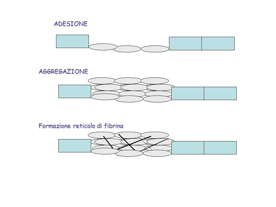 ADESIONEAGGREGAZIONE Formazione reticolo di fibrina