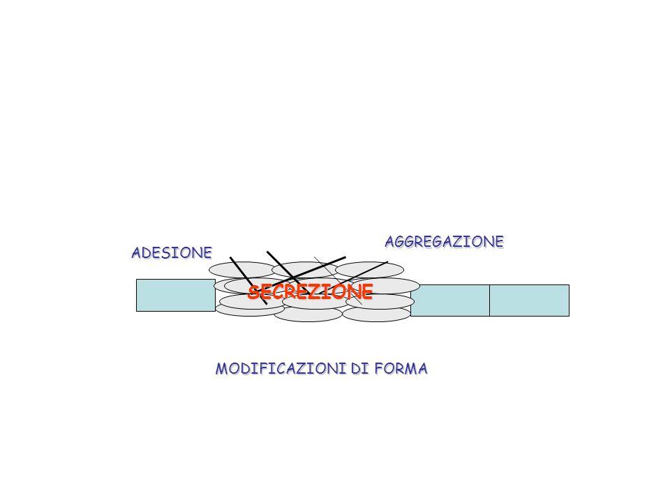 ADESIONEAGGREGAZIONE SECREZIONE MODIFICAZIONI DI FORMA
