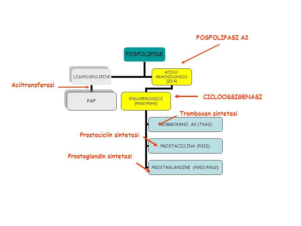 FOSFOLIPIDE LISOFOSFOLIPIDE PAF ACIDO ARACHIDONICO (20:4) ENDOPEROSSIDI (PGG2/PGH2) TROMBOXANO A2 (TXA2) PROSTACICLINA (PGI2) PROSTAGLANDINE (PGE2/PGD