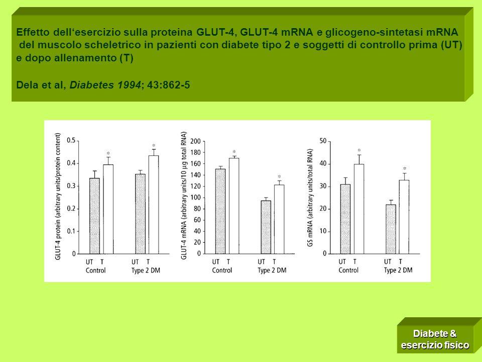 Studi sull´insorgenza del DM tipo II (III) Effetto dellesercizio sulla proteina GLUT-4, GLUT-4 mRNA e glicogeno-sintetasi mRNA del muscolo scheletrico in pazienti con diabete tipo 2 e soggetti di controllo prima (UT) e dopo allenamento (T) Dela et al, Diabetes 1994; 43:862-5 Diabete & esercizio fisico