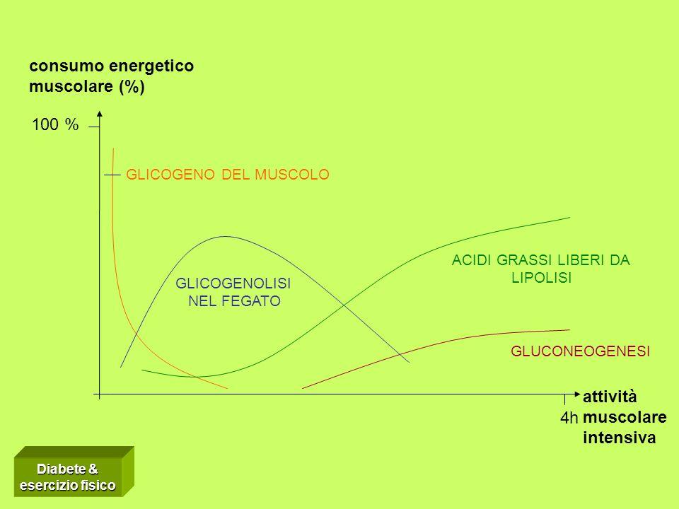 ACIDI GRASSI LIBERI DA LIPOLISI GLICOGENOLISI NEL FEGATO GLICOGENO DEL MUSCOLO GLUCONEOGENESI 4h 100 % attività muscolare intensiva consumo energetico