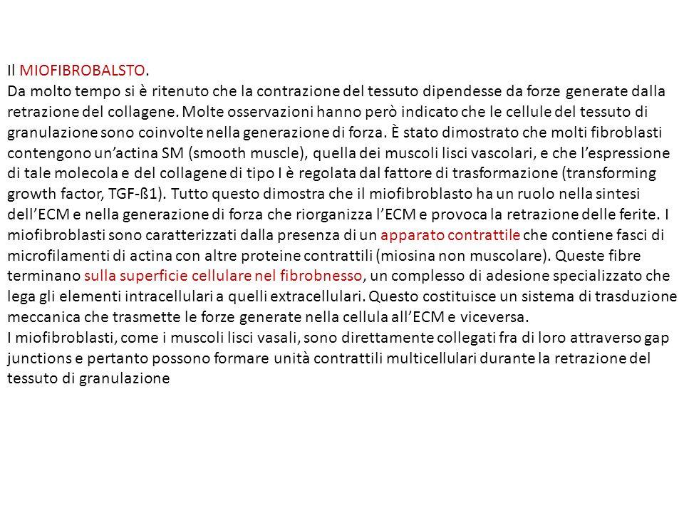 Adipose tissue remodeling and obesity Kai Sun, Christine M.