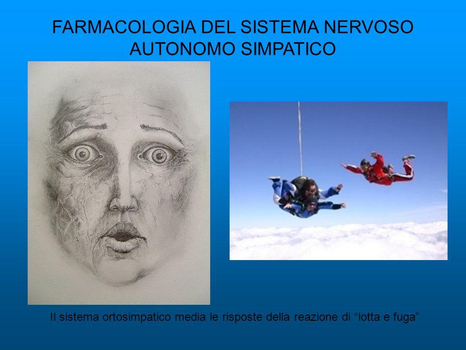 FARMACOLOGIA DEL SISTEMA NERVOSO AUTONOMO SIMPATICO Il sistema ortosimpatico media le risposte della reazione di lotta e fuga