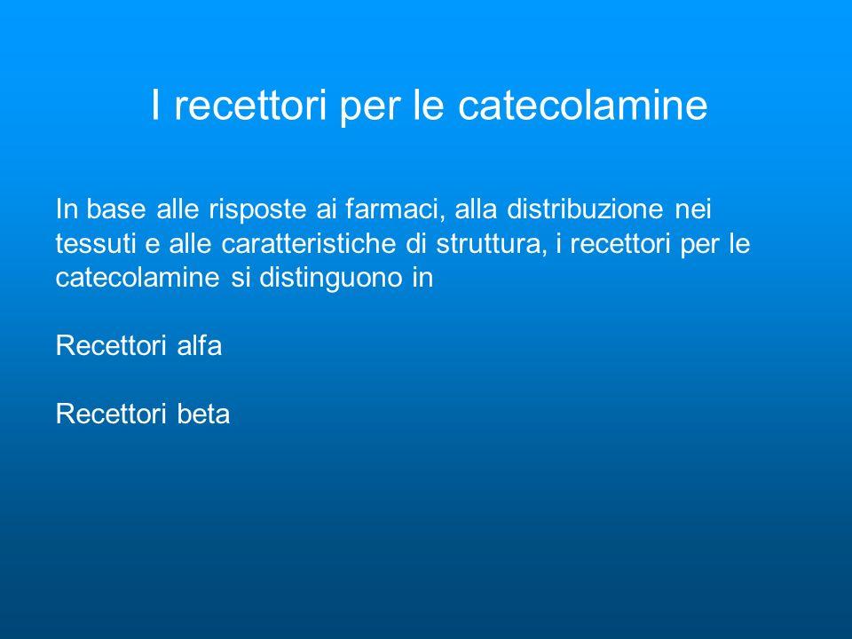 I recettori per le catecolamine In base alle risposte ai farmaci, alla distribuzione nei tessuti e alle caratteristiche di struttura, i recettori per le catecolamine si distinguono in Recettori alfa Recettori beta